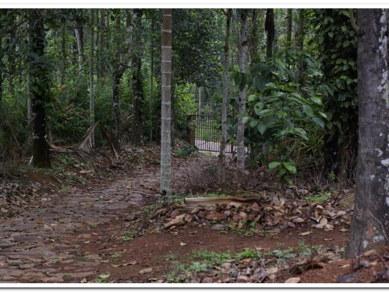 Coffee Plantation With House for sale at Wayanad -Ambalavayal
